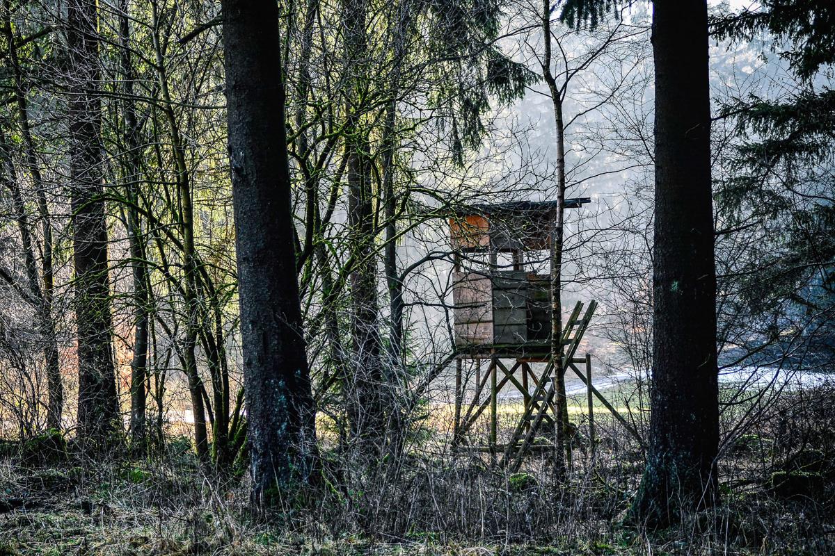 04_harz-wald-natur-bei-campingplatz